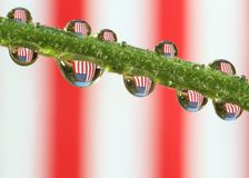 American Flag in Dewdrops Stock Image
