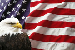 American flag with eagle. The national bird of the United States Of America, the majestic bald eagle against a Flag background royalty free stock photography