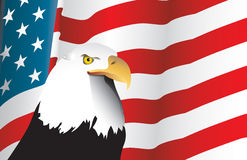 American Flag and Eagle. A vigilant eagle looks out standing infront of an American Flag vector illustration