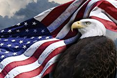 American flag and eagle. A billowing American flag and a bald eagle