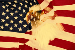 American flag with eagle. Retro, nationaly USA symbol Royalty Free Stock Photos