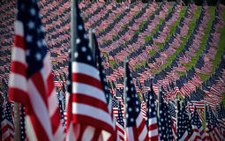 American flag field. Field of American Flags Stock Photo
