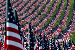 American flag field. Field of American Flags Stock Image