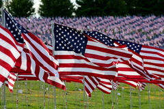 American flag field. Field of American Flags Stock Photography