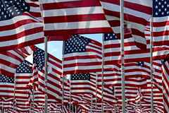 American flag field. Field of American Flags Royalty Free Stock Image