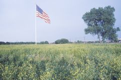American Flag in Field of Wildflowers, St. Louis, Missouri Stock Photo