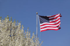 American Flag and Flowering Dogwood. American flag flapping in the breeze next to a Flowering Dogwood against a blue spring sky - Georgia Stock Photography
