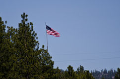 American Flag Flying Over The Pines Royalty Free Stock Photography