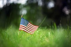 American flag in green grass. American flag outside in green grass Royalty Free Stock Photo