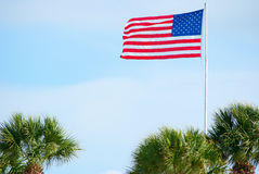 American flag and palm trees Stock Image