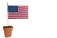 American flag planted in terra cotta planter with soil. Isolated on white backgound royalty free stock photos