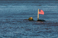 The American Flag on a Rock in a River Stock Photography