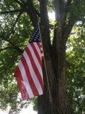 American flag under a tree. American flag under a shady Royalty Free Stock Photos