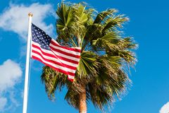 American Flag Waving Next to Palm Tree royalty free stock photography