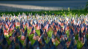 American Flags. Hundreds of American Flags in sunlight Royalty Free Stock Photos