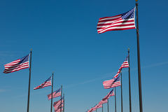 American Flags. A photo of many American Flags blowing in the wind Royalty Free Stock Photo