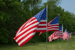American Flags. A photo of many American Flags blowing in the wind Stock Photos