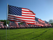 American Flags. Set up in Red Wing, Minnesota to honor veterans on Memorial day, 2008 Royalty Free Stock Photography