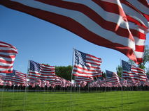American Flags. Set up in Red Wing, Minnesota to honor veterans on Memorial Day, 2008 Stock Photography