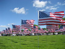 American Flags. Set up in Red Wing, Minnesota to honor veterans on Memorial Day, 2008 Royalty Free Stock Photo