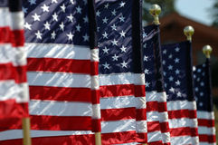American Flags. Flying in breeze stock image