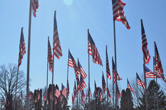 American flags blowing in wind Stock Photo
