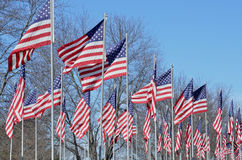 American flags blowing in wind Royalty Free Stock Photo