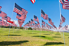 American flags displaying on Memorial Day Stock Images