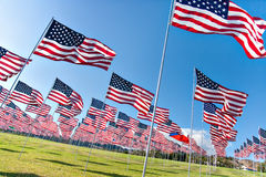 American flags displaying on Memorial Day. Los angeles Stock Photography