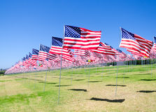 American flags on a field Stock Photography