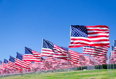 American flags on a field Stock Image