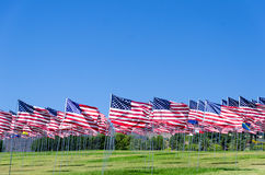 American flags on a field Stock Images
