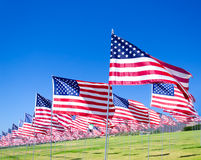 American flags on a field Stock Photos