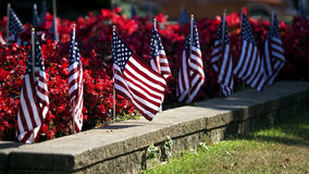 American flags in flower bed. American flags in bed of red flowers at War Memorial stock photo