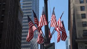 American Flags stock video footage