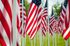 American flags on green grass Royalty Free Stock Image