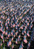 American Flags in Honor of Our Veterans. A display of American flags in honor of all our veterans on Veterans Day royalty free stock photos