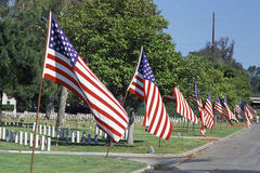 American flags lining street Stock Images