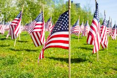 American flags. Many american flags on grass royalty free stock images