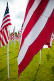 American flags on Memorial Day Stock Photography