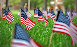 American Flags. A row of American Flags Royalty Free Stock Image