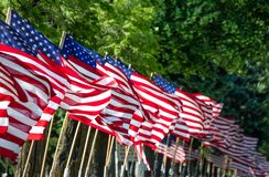 American flags. Row of American Flags on a cemetery ally on Memorial Day stock photos