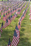 American flags. In a row in vertical Stock Photography