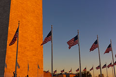 American flags stand in US capital at sunset. Royalty Free Stock Image