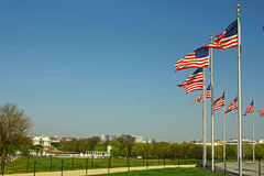 American flags surrounding the Washington Memorial. On the National Mall in Washington DC, picture taken on the U.S. Independence Day Royalty Free Stock Photo