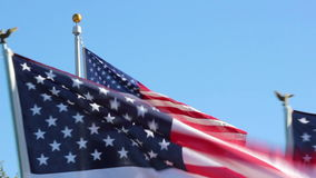American Flags waiving on Veterans Day stock video footage