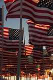 American flags waving at sunset Stock Photos