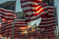 American flags waving at sunset Royalty Free Stock Images