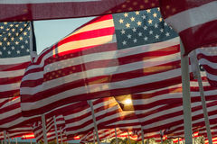 American flags waving at sunset Stock Images