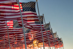 American flags waving at sunset Stock Photography